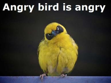 41aa4-angrybird