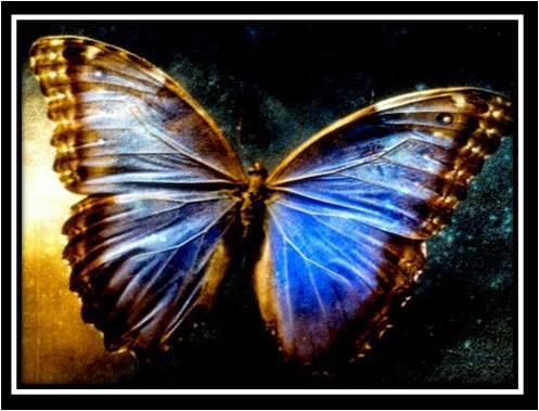 52528-butterfly