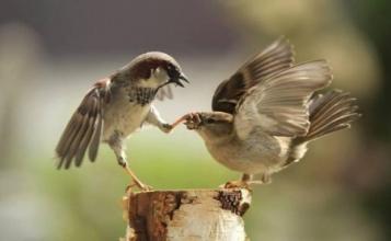 birdwisdom